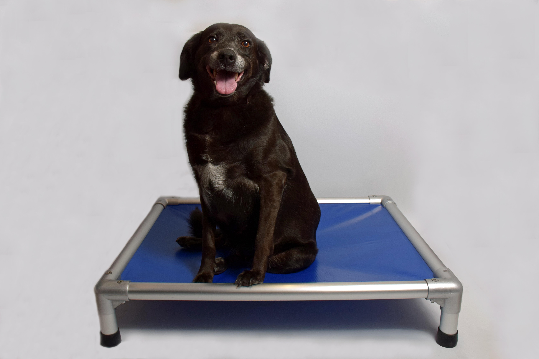 Illustration lit pour chien Indestructible bleu